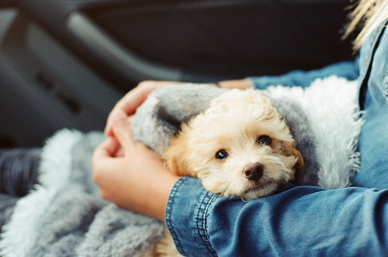 Emotional Support Animals: Happiness is a Warm Puppy