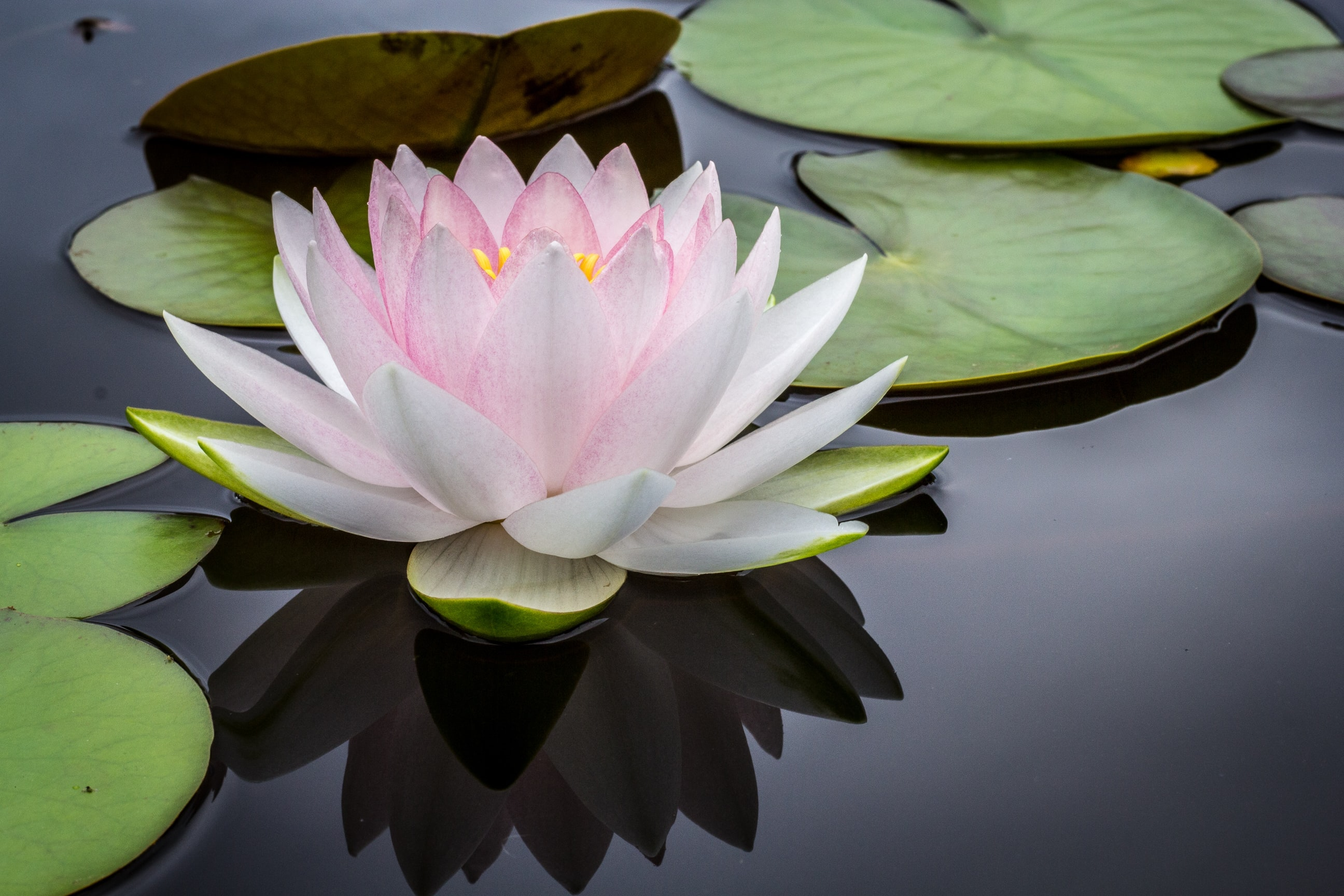 Mindful Self-Compassion: Transform Self-Worth and Build Resilience